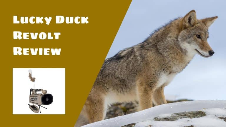 Best Electronic Coyote Calls - 2019 Reviews | Electronic Coyote Calls