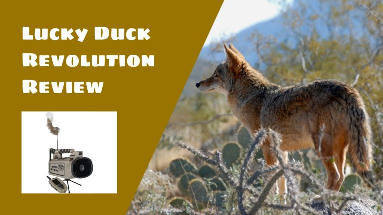 Lucky Duck Revolution Review